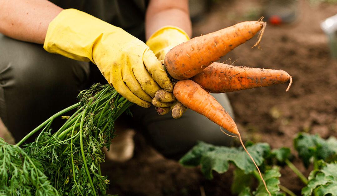 L'arte dell'orto con Ecodyger