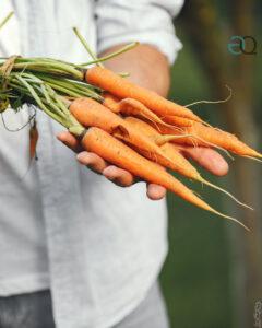 healthy food fiumicino